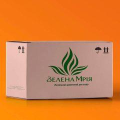 Упаковка Зелена мрія